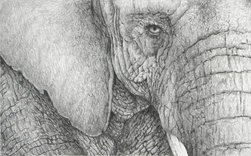 """Bull Elephant"""