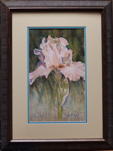 """""""Pink Iris"""""""