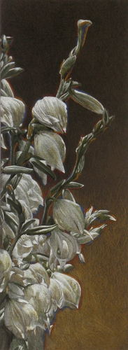 """Yucca Blossoms"""