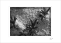 Nature, black and white, plants, beach, sand - Nature Photography