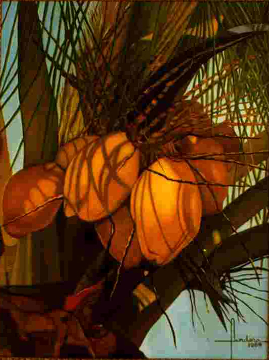 """""""Golden Coconuts of the Keys"""" _ Fundora, Thomas  (large view)"""