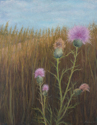 Purple Thistle by the Path (thumbnail)
