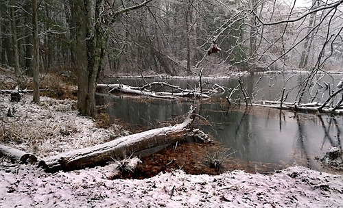 Early Winter Pond