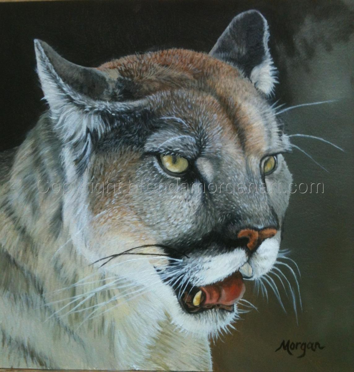 Cougar (large view)