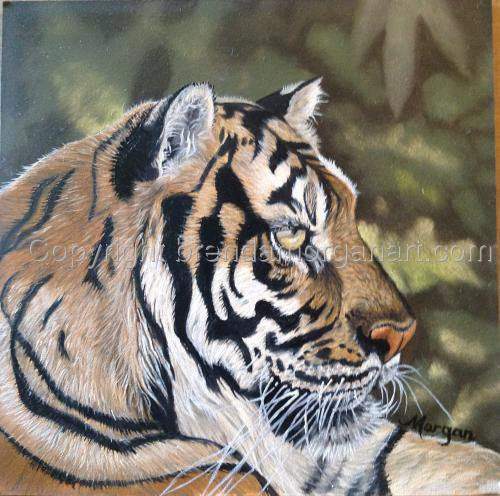 Tiger (Turpentine Creek Wildlife Refuge