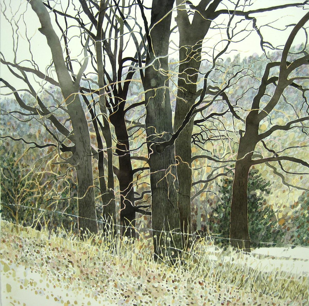 Burr Oak Grove (large view)