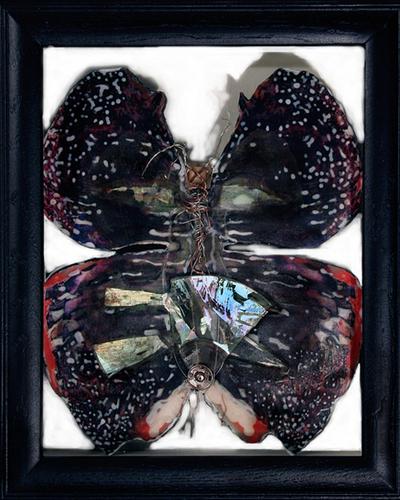 Butterfly I.E.D. ii