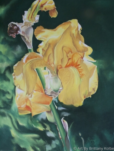 Iris Yellow Sunshine
