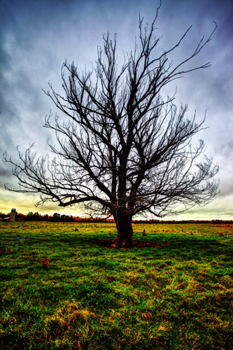 Brule Tree by Brian D. Robb