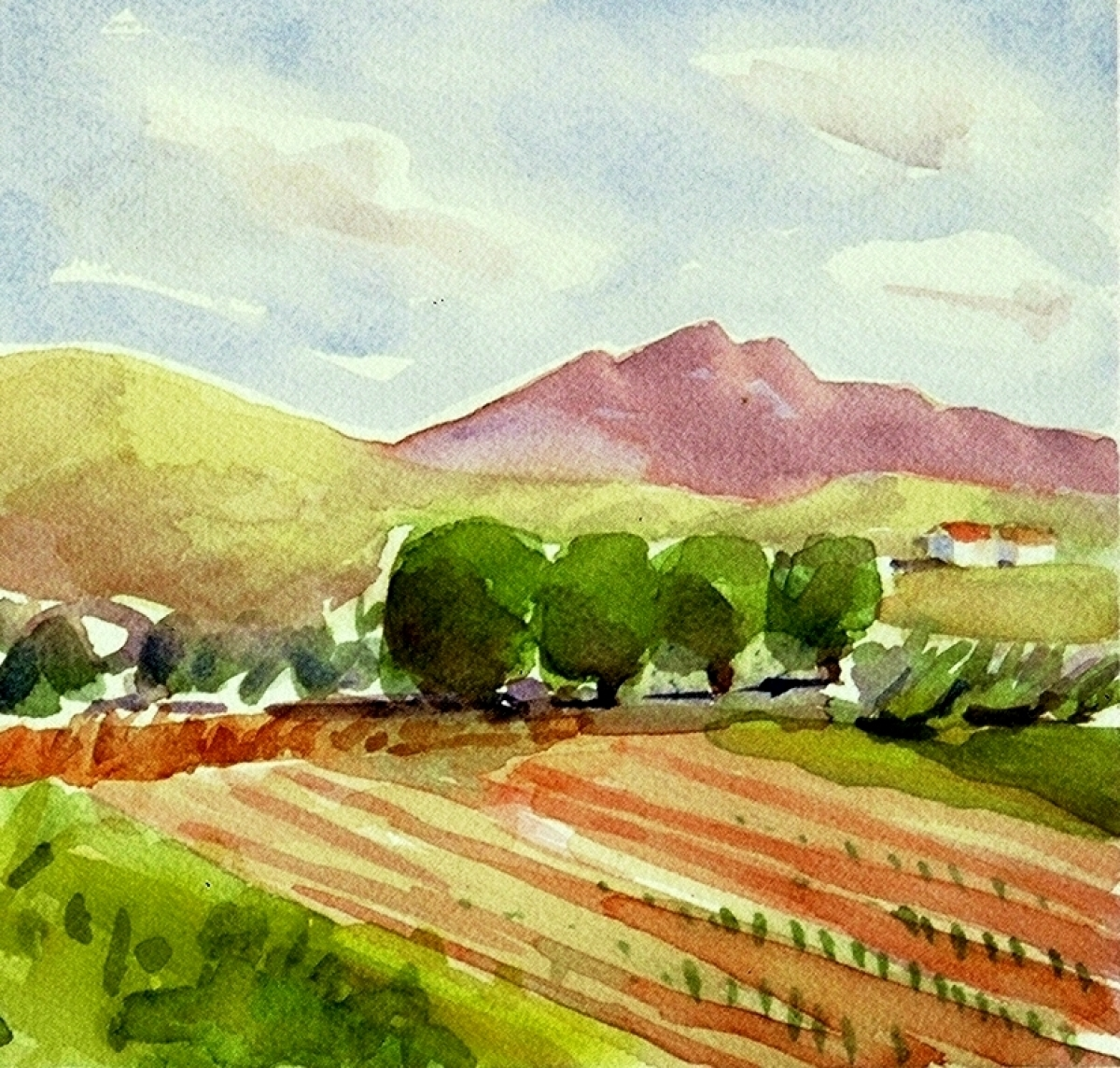 Fields in Todos Santos (large view)