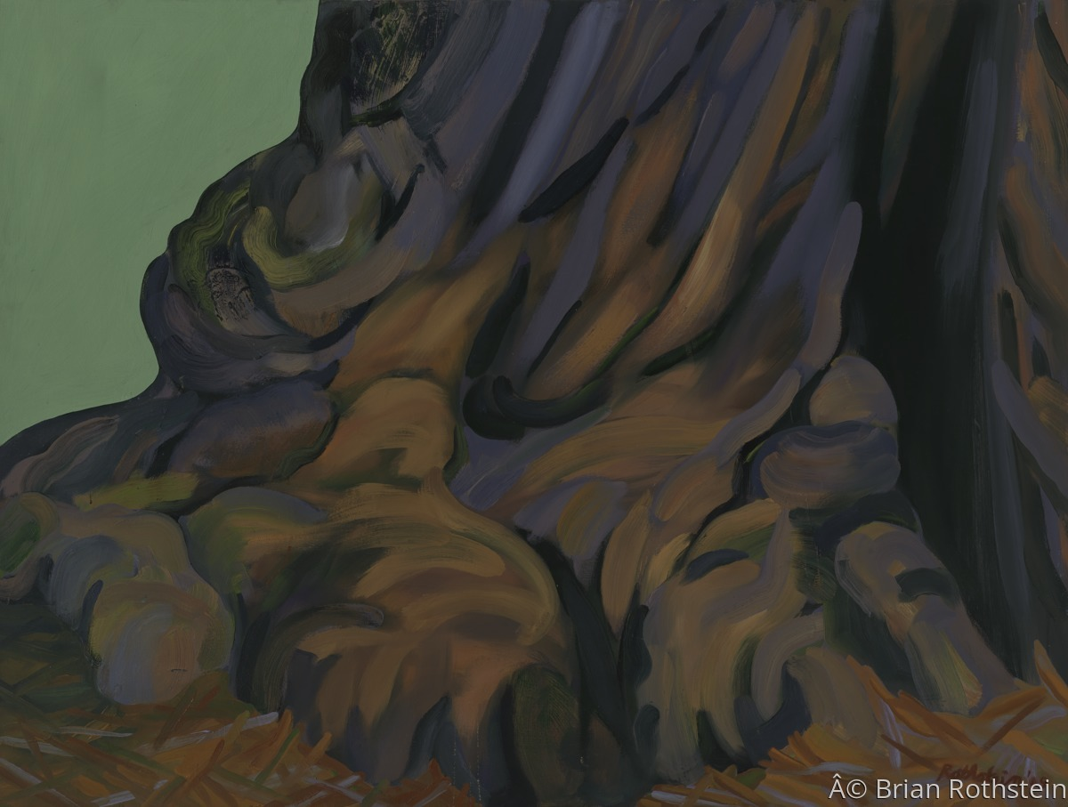 Coastal Redwood (large view)