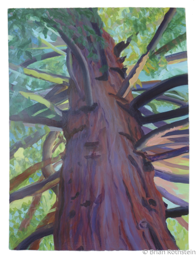 Vallejo Redwood by Brian Rothstein