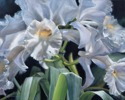 #523 Cattleya Orchid (thumbnail)