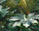 #525 Paper Plant (thumbnail)
