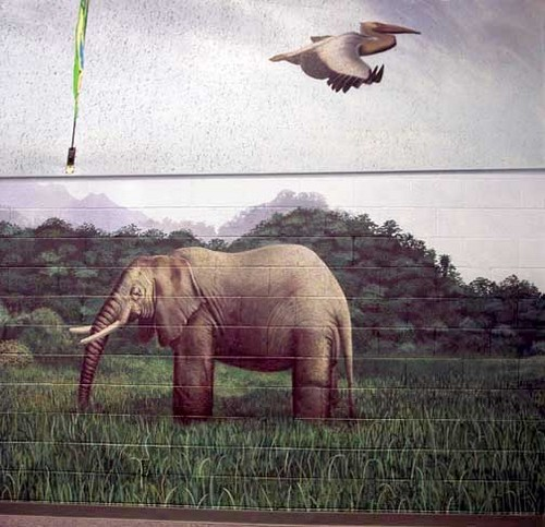 Elephant Wall