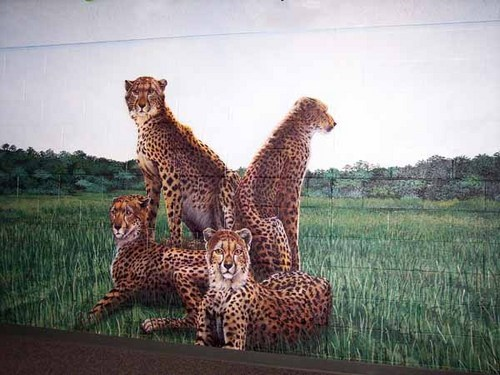 Cheetah Wall