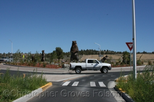 Mother Bear and Cubs in Traffic Circle