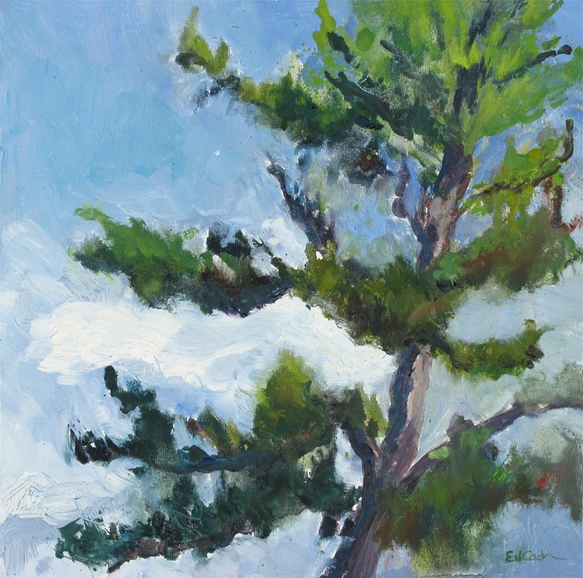 Blue Ridge Pine (large view)