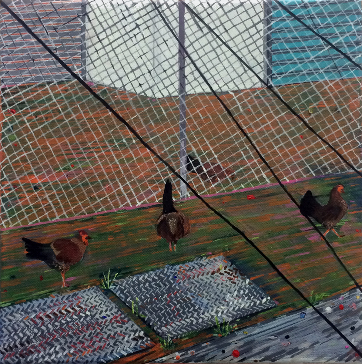 """No Rooster"" (large view)"