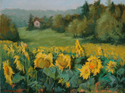 Sunflowers near Haut Baran (thumbnail)