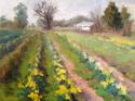 Daffodil Farm (thumbnail)