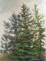 Spruce,Pine,Fir (thumbnail)