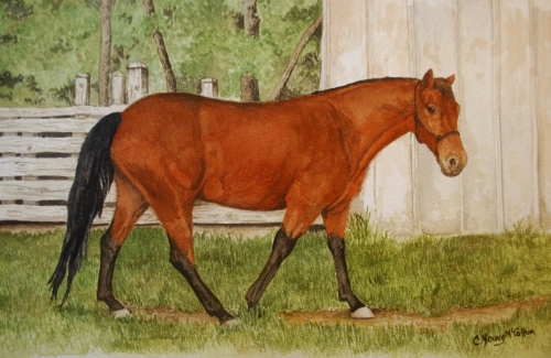 Angelia's Horse by Carole Young McCollum, GWS