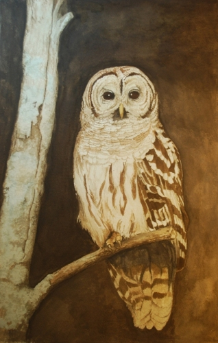 Barred Owl I by Carole Young McCollum, GWS
