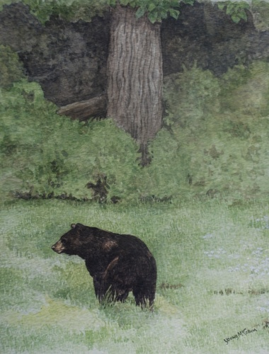Goshen Mountain Bear