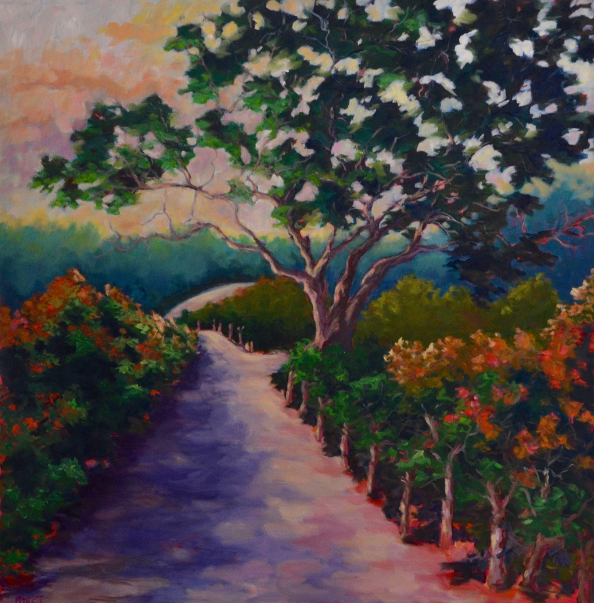 A Napa Valley Path (large view)