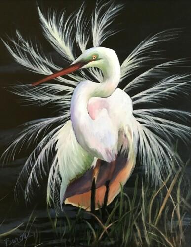 Egret in Mating Season