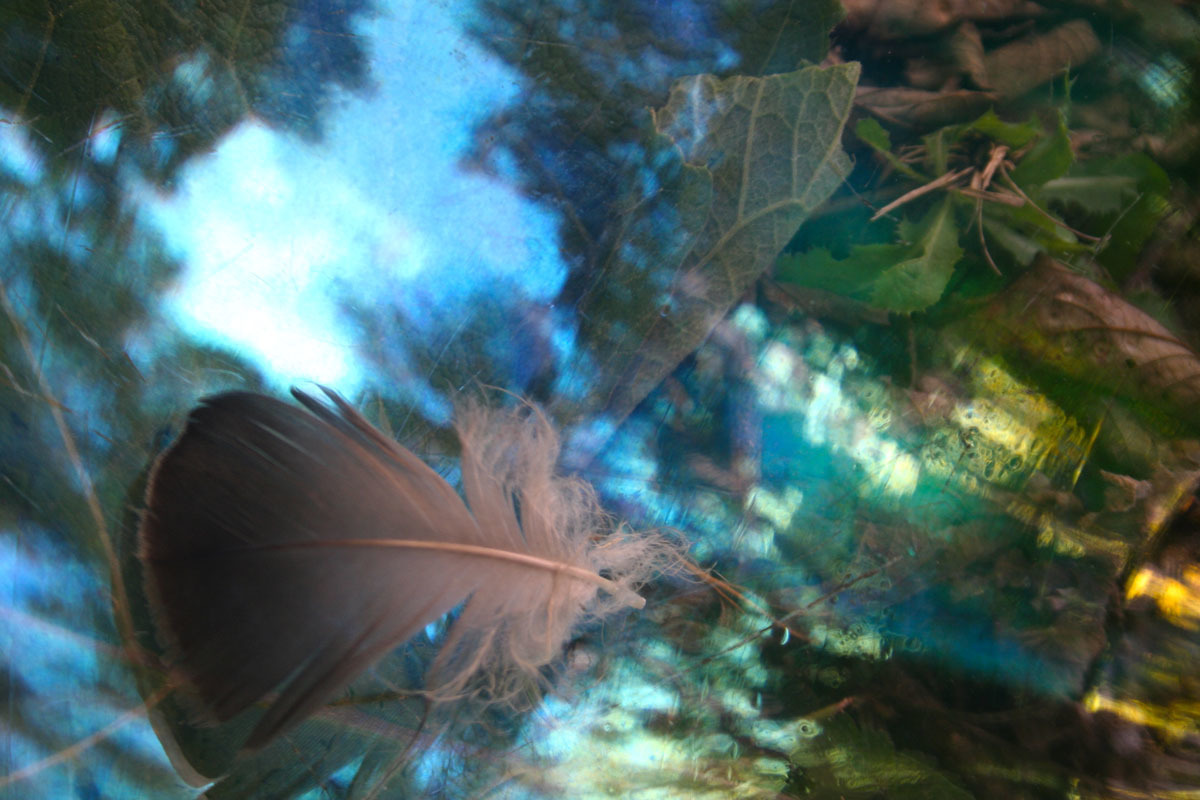 Feather in the Trees (large view)