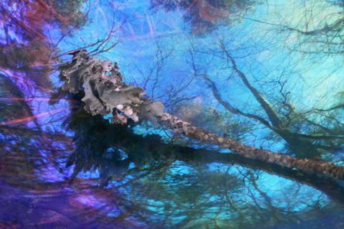 Fairy's Wand
