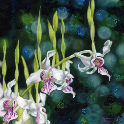 Horned Orchids