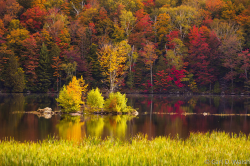 Peak Vermont Foliage by Carl D. Walsh