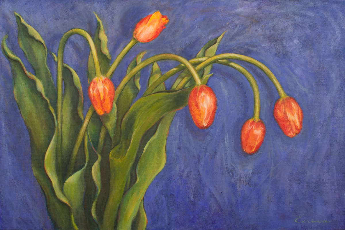 Five Tulips (large view)