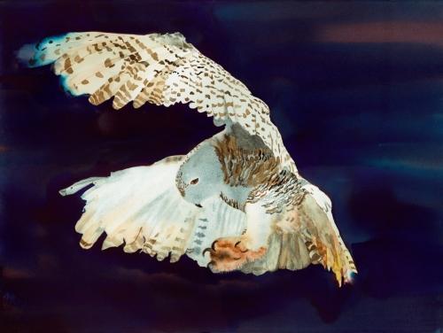 Snowy Owl, Nisqually Delta 2012