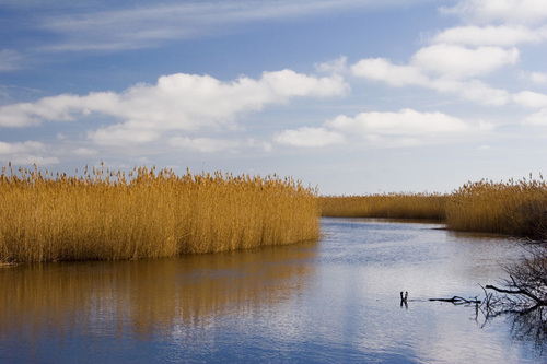 """""""Trustom Pond"""""""