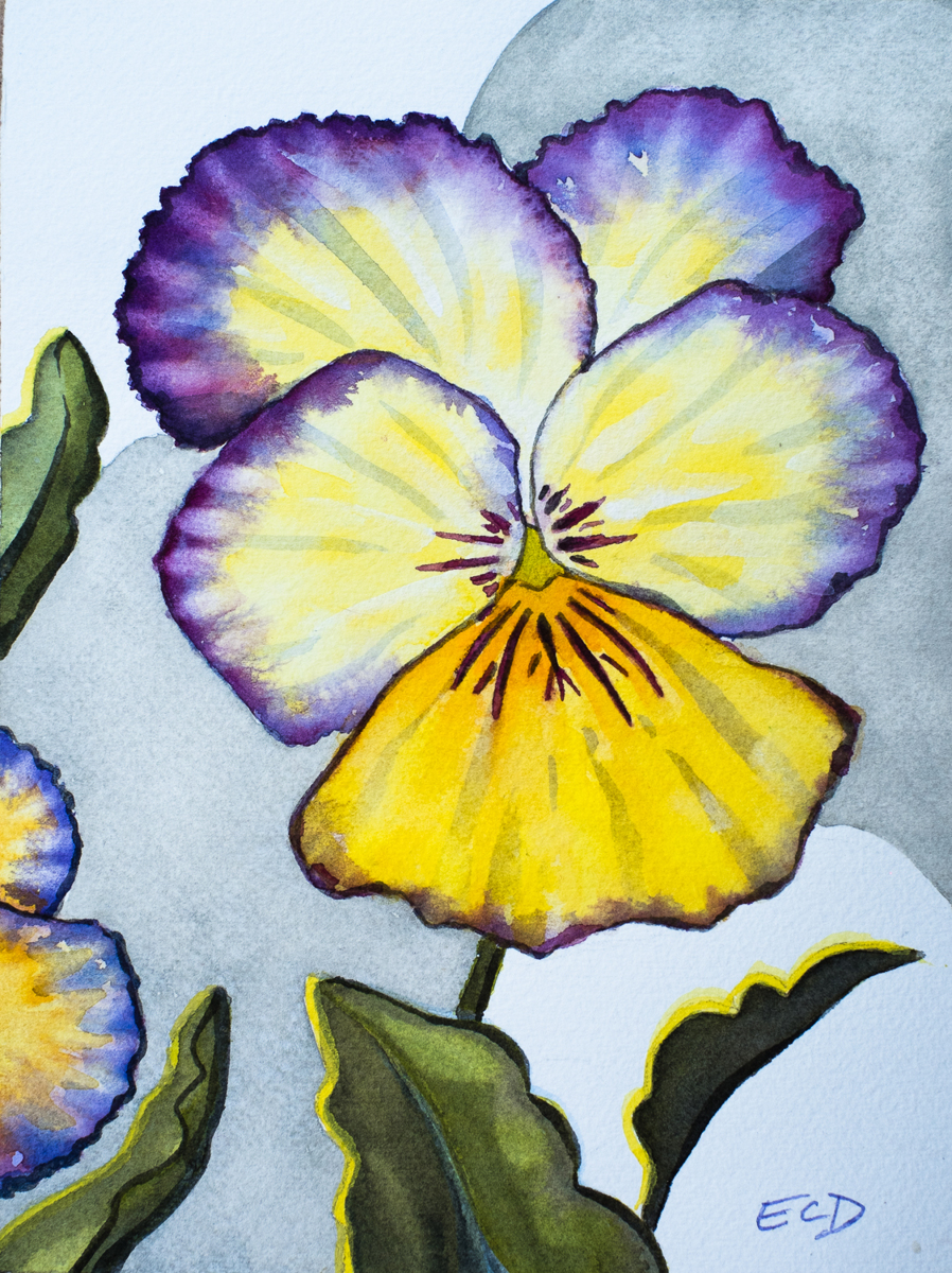 Pansy 1 (large view)