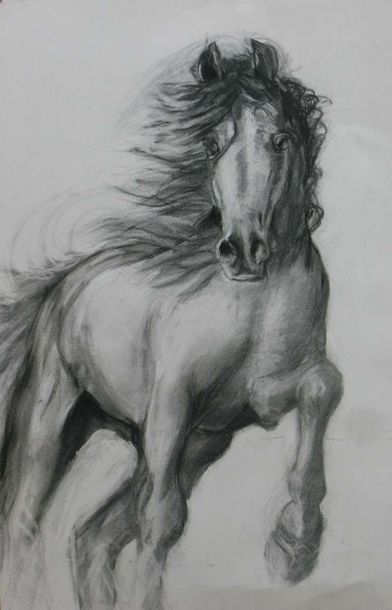 Sketch-Horse galloping (large view)