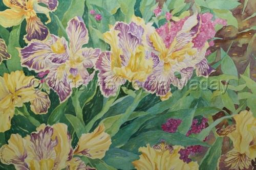 Garden Irises by Christine Verga Maday