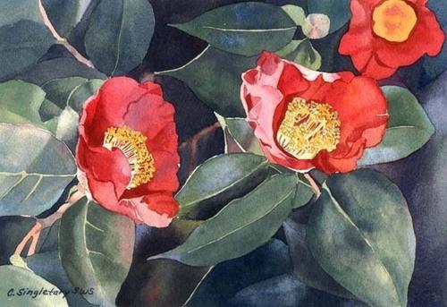 """Camellias"" by Cindy Singletary"
