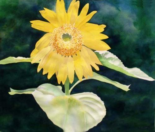 """Sunflower III"" by Cindy Singletary"