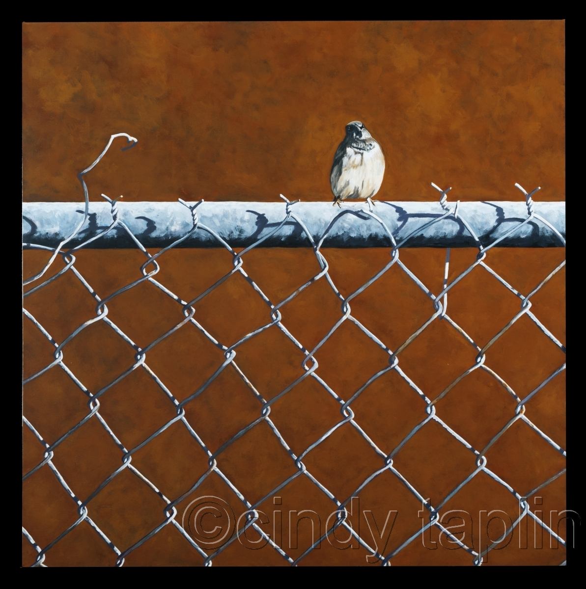 Bird on a chain link fence on a burnt sienna background (large view)