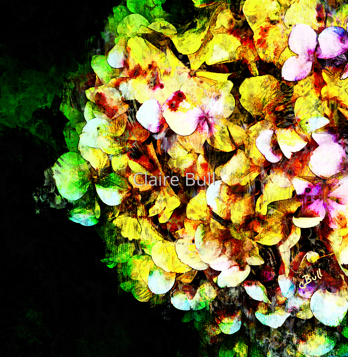 Hydrangea Color (large view)