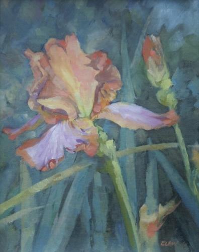 Beared Iris by Chuck Law