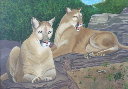 Cougars Reclining