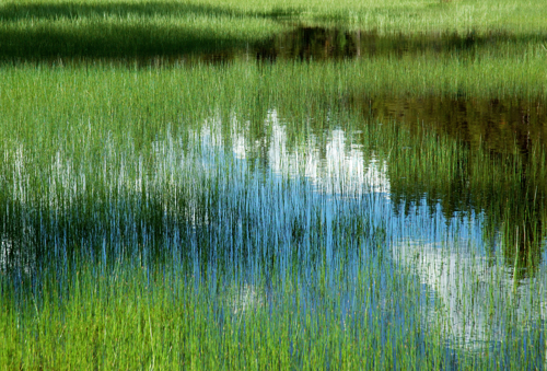 Yellowstone Marsh by carol h macleod images