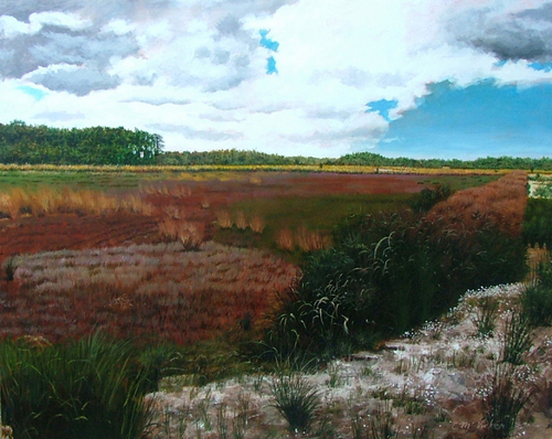 Cranberry Bog, Pine Barrens