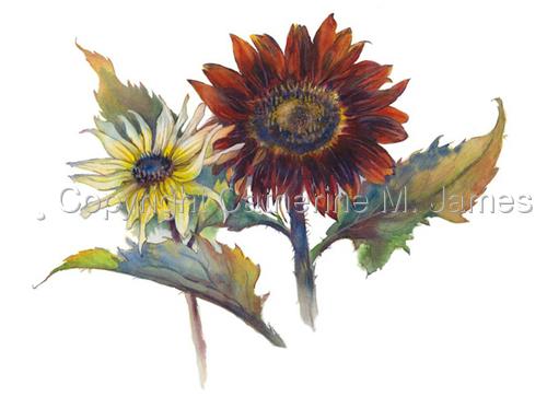 Sunflowers for Finn Hill Winery